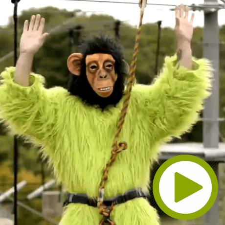 monkey_hype