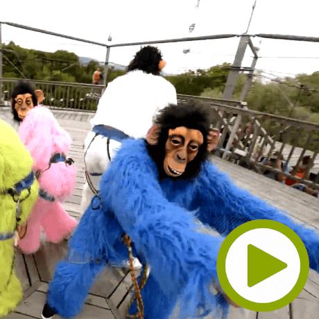 monkey_playme